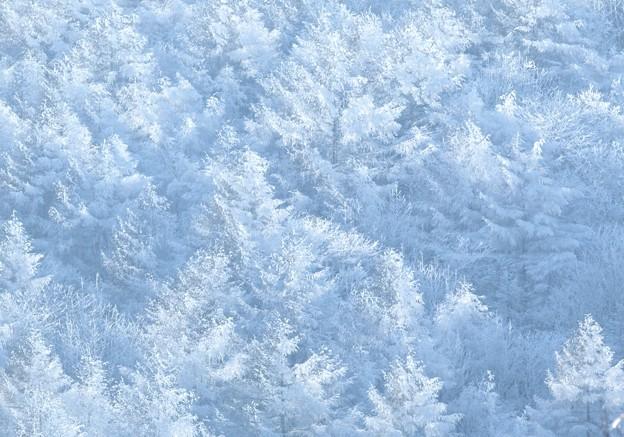 冬森が誘ってる。
