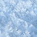 Photos: 冬森が誘ってる。