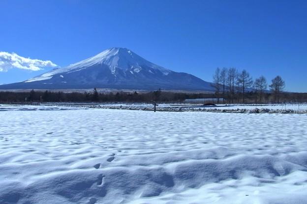 雪原に足跡残し。