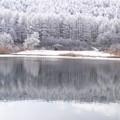 氷結前の池に映る森。