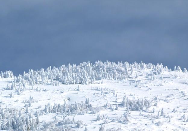 山頂の白樹林。