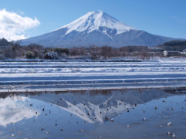 真冬も氷らぬ田んぼには。