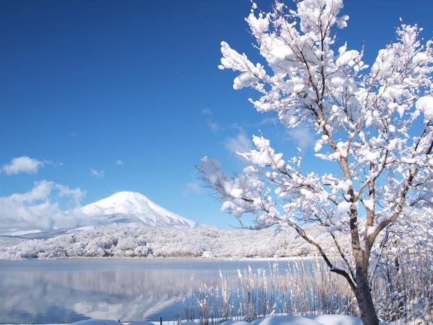 雪の華咲く朝。