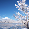 Photos: 雪の華咲く朝。