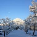 春の雪のあくる朝。