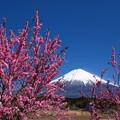 花桃のピンク色。