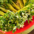 Photos: 旬なわさびの花。