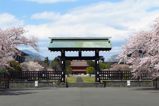 総門から三門を望む、桜の季節。
