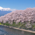 Photos: 潤井川の春模様。