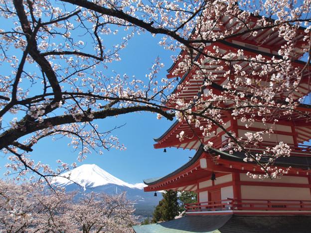 今年は見ることできない、桜・塔。
