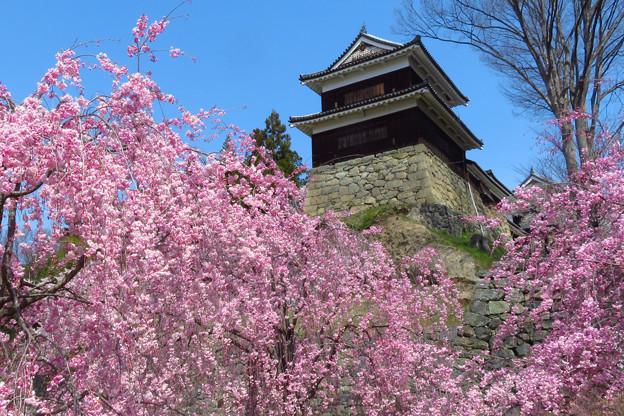 枝垂桜を見上げて。