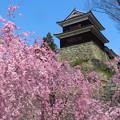 Photos: 枝垂桜を見上げて。