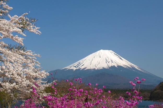 残る桜と咲くつつじ。
