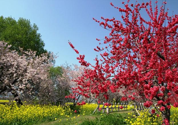 花たちの賑わいの日。