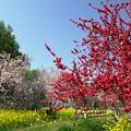 Photos: 花たちの賑わいの日。