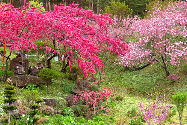 Photos: はなももの小庭。