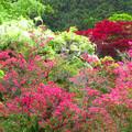 Photos: 賑わい濃い庭。