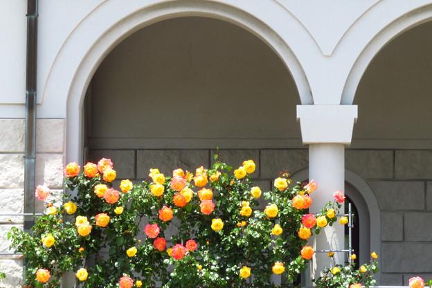美術館の薔薇ー2