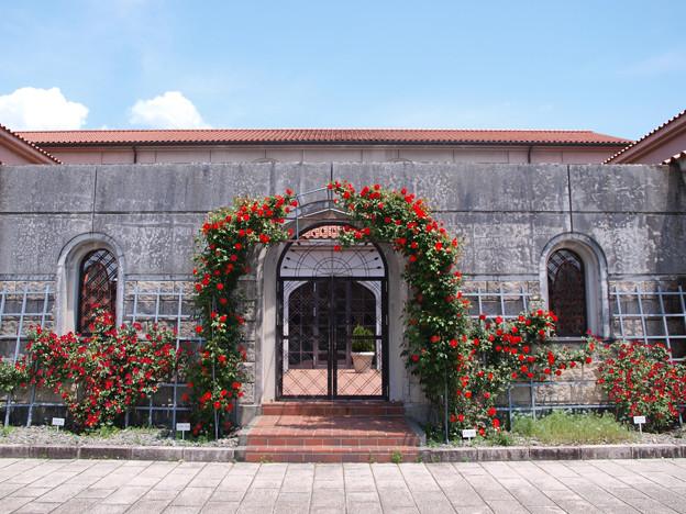 美術館の薔薇ー3
