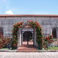 Photos: 美術館の薔薇ー3