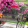 薔薇のベンチ2020。