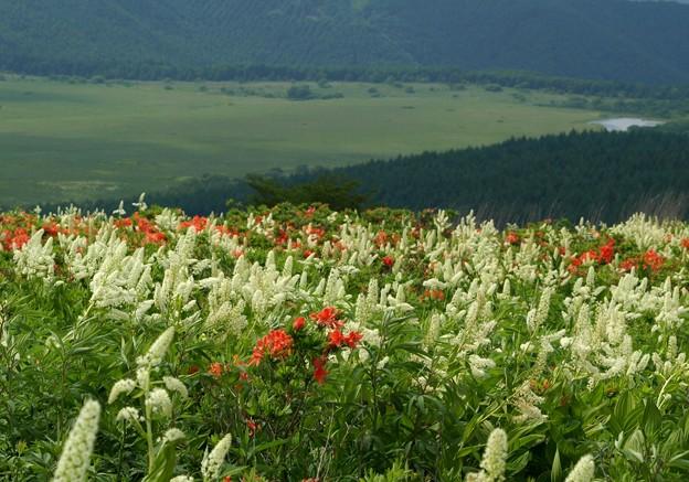 湿原望む高原の花から。
