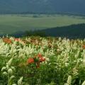 Photos: 湿原望む高原の花から。