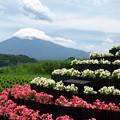 Photos: ベコニア小富士越しに。