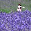 ラベンダー畑のかわいい見学者。