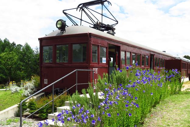 桔梗の花咲く、電車教室。
