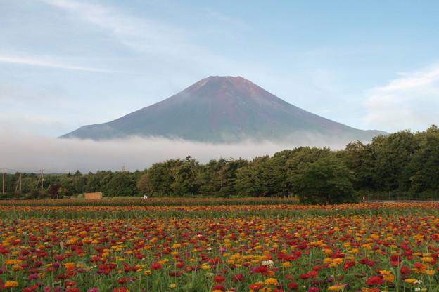 Photos: 朝を迎えた花畑。