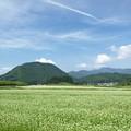 Photos: そば畑と終わりの夏の空模様。