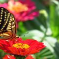 Photos: 彩り花の蜜の味。