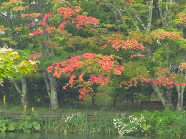 初紅葉の木を見つけた。