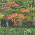 Photos: 初紅葉の木を見つけた。