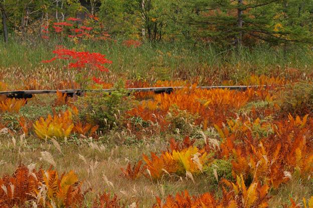 湿原の草紅葉燃えそう。