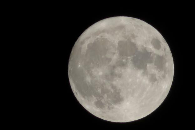 名月を撮ってくれよとコンデジで。