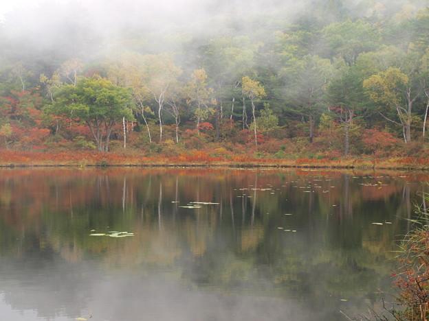 薄霧たつ一沼秋。
