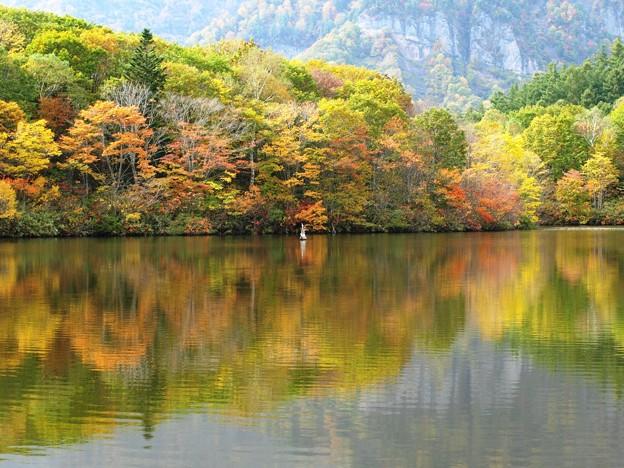 鏡池、秋に賑わいの色。
