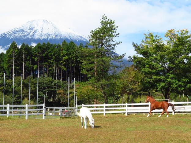 白馬と栗毛。