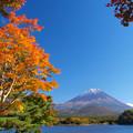 イェローオレンジ色に秋化粧。