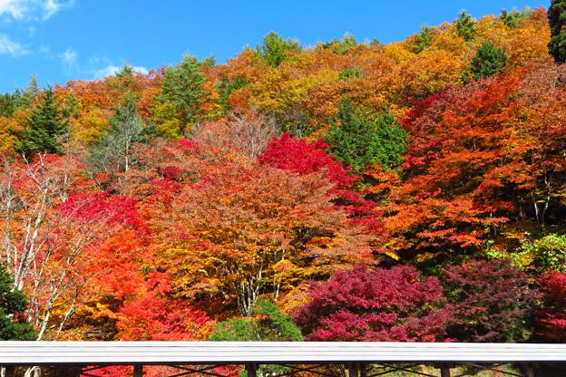 お寺裏山の紅葉彩り。