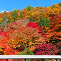 Photos: お寺裏山の紅葉彩り。