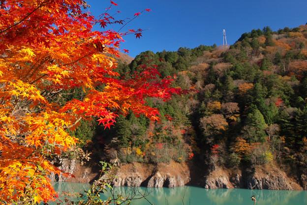 ダム湖も盛りのもみじ日和。