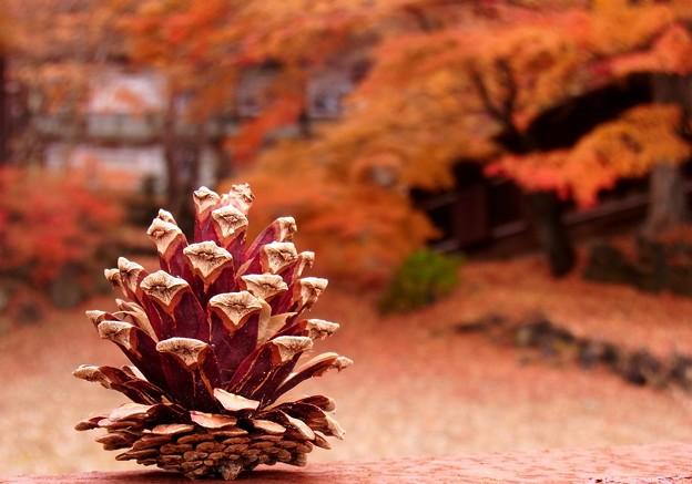 秋深し、松ぼっくり一つ。