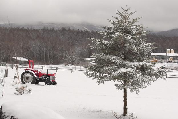 雪の牧場のツリー。