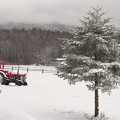 Photos: 雪の牧場のツリー。