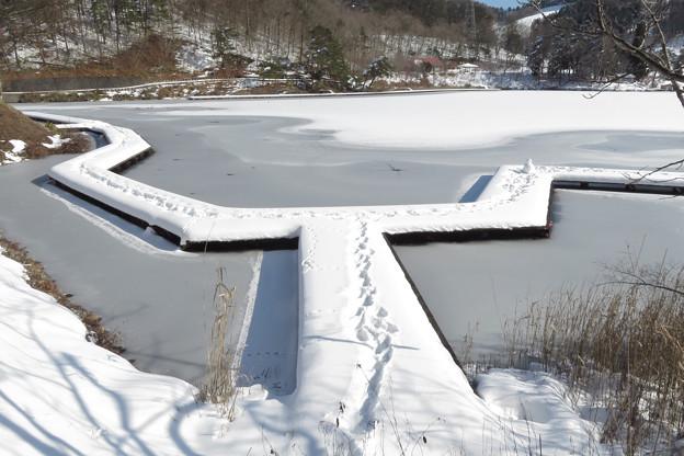雪の木道の足跡。