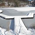 Photos: 雪の木道の足跡。