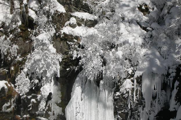 氷の華咲く。